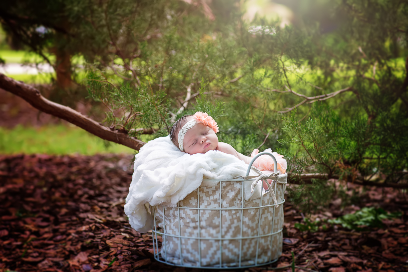 Beautiful Baby Girl, Newborn Portraits at Oaks By the Bay